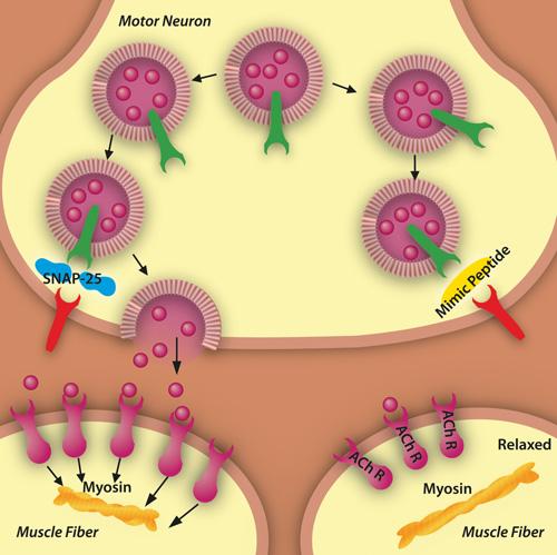 Peptide-diagram